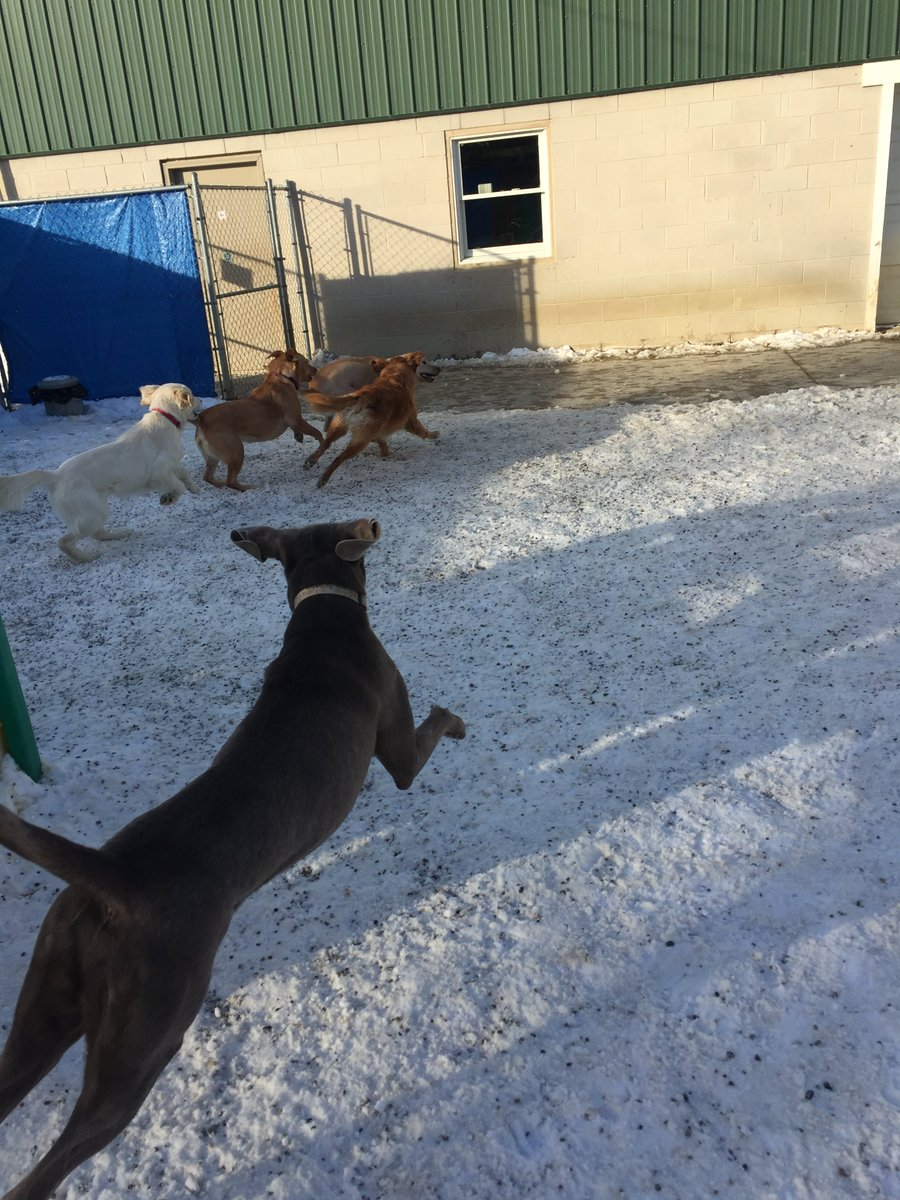 Stitch bounds after Breslin, Clary, Wyatt, Maggie Mae and Diesel