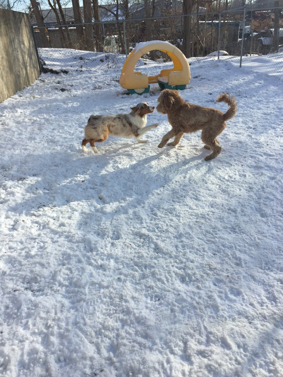Ruger asks Carmine to race