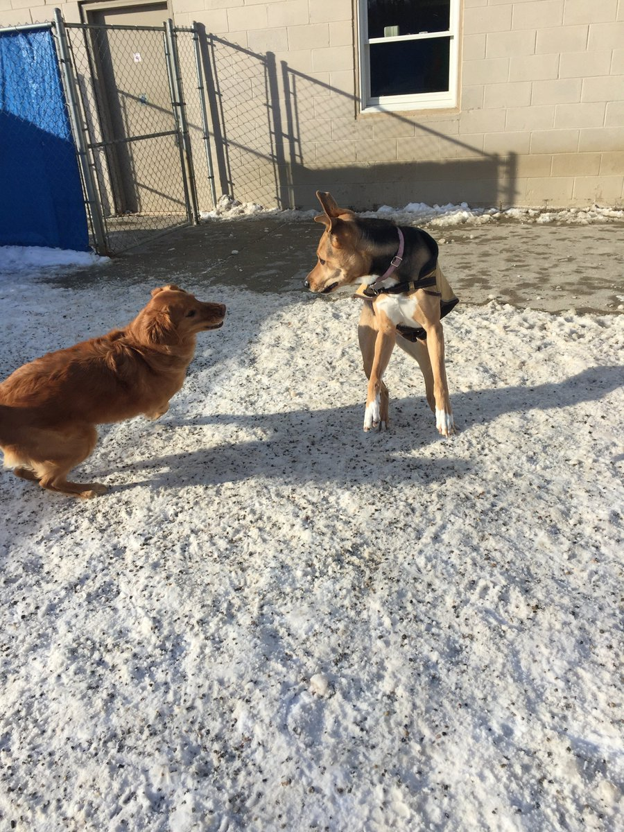 Chloe gets Maggie Mae to chase her