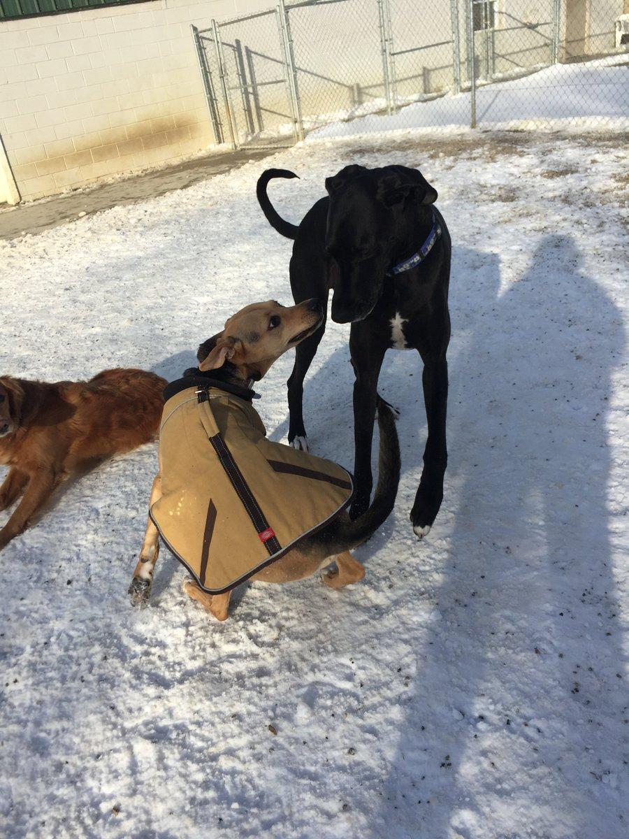 Zeus and Chloe race off