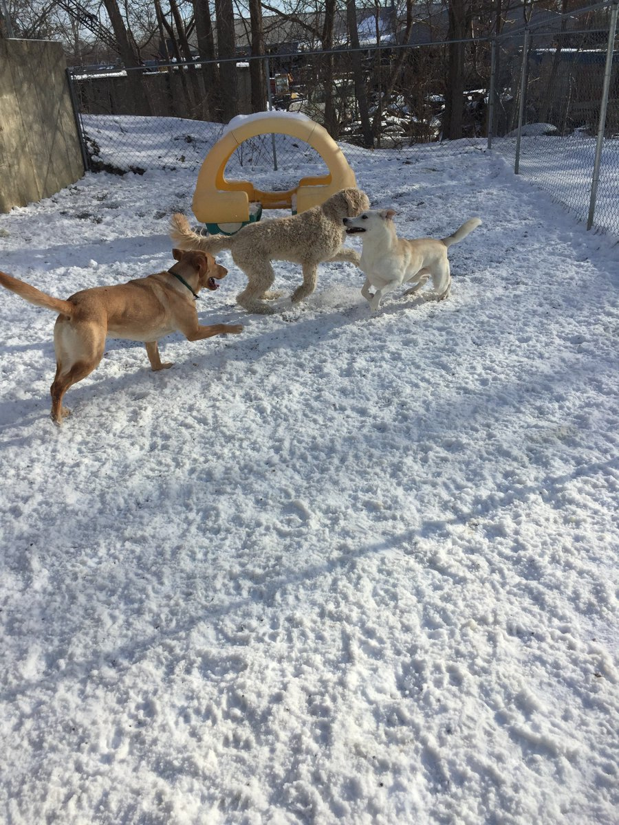 Leif, Riley H. and Kipling race around