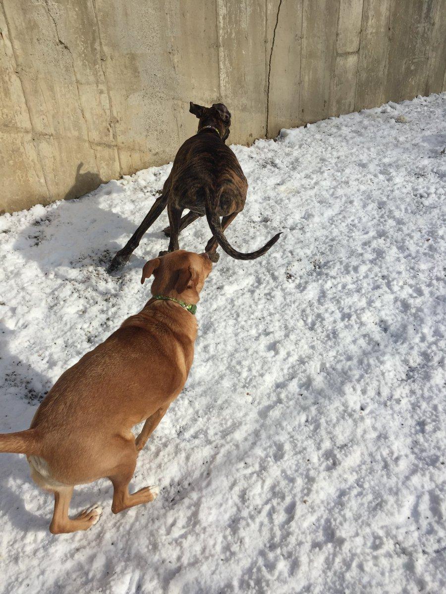 Heimdall gets Sampson B. to cahse him