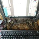 そんな狭いところが好きなの?猫が寝ているところが窮屈すぎてかわいい