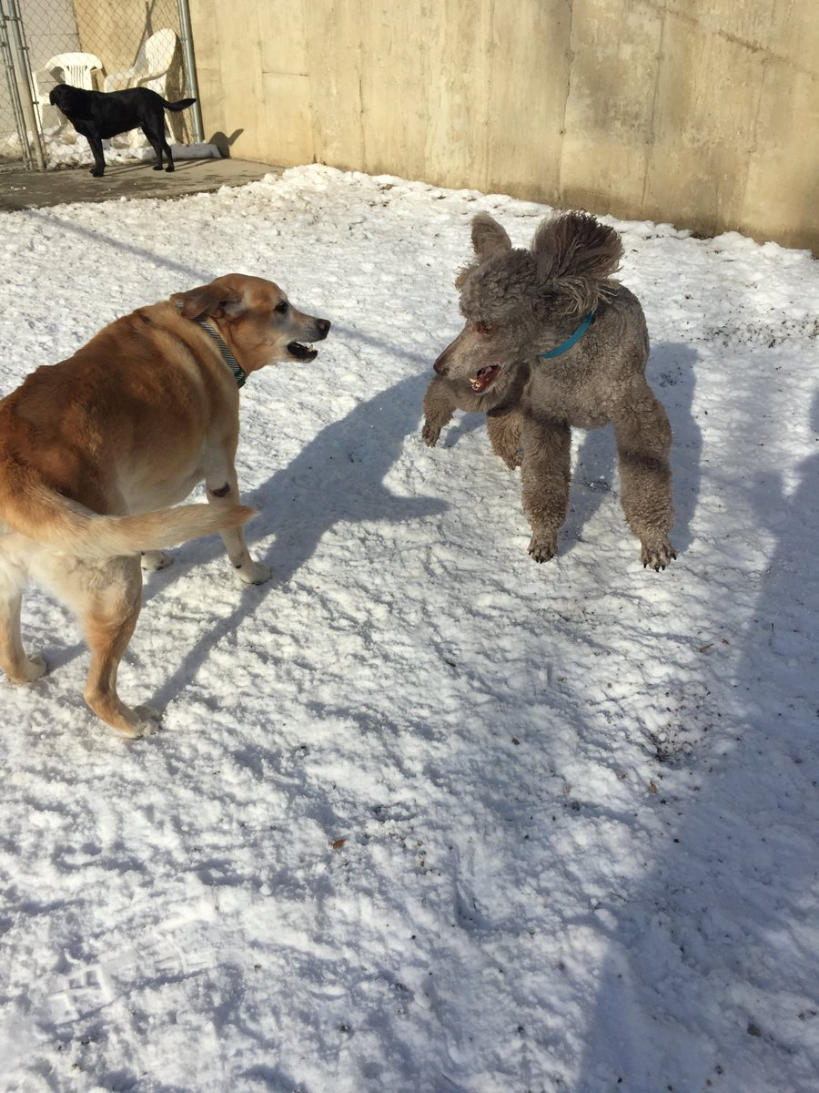 Teddy and Molly get ready to play
