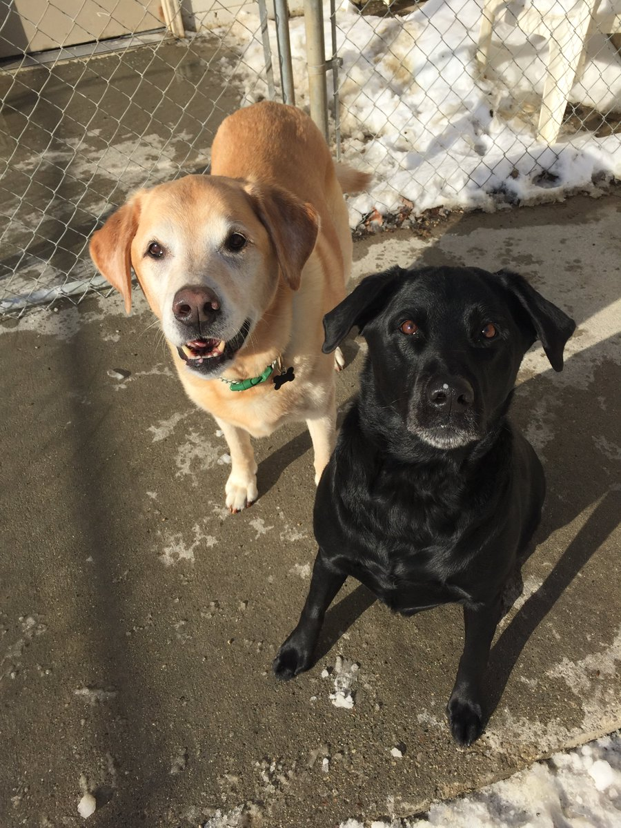 Maizy and Molly show off how cute they are
