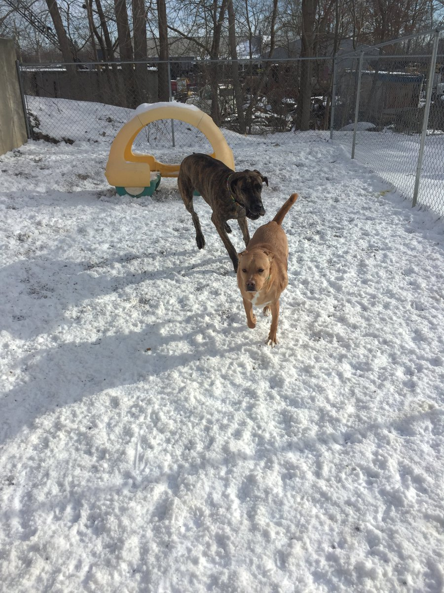 Sampson B. and Heimdall play follow the leader