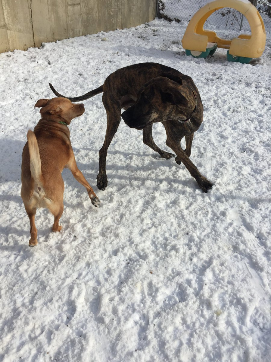 Heimdall and Sampson B. play ring around the rosie