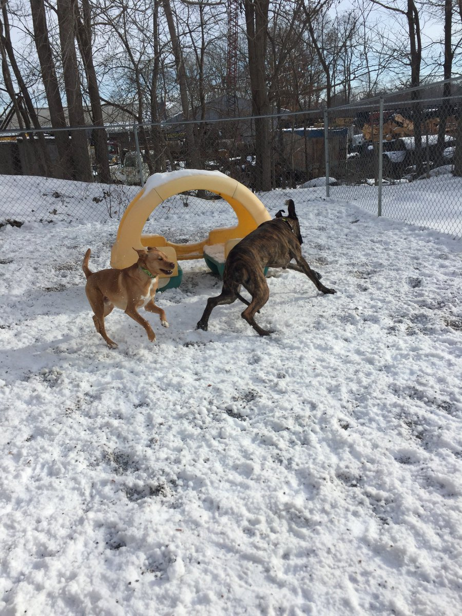 Sampson B. and Heimdall fly around the yard