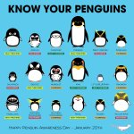 Happy Penguin Awareness Day! Know your penguins! There are 18 different species; all are found in the Southern Hemisphere, though the Galapagos lives near the Equator. The Emperor is the tallest at more than 1m. Many species are threatened or endangered #PenguinAwarenessDay