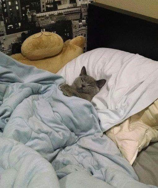 Buenas noches, buenos sueños.... https:/...