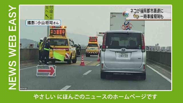 【NEWS WEB EASY】やさしい日本語のニュースです。「高速道路で『ネコ捕獲中』 車が通ることができなくなる」「ロケットを打ち上げたあとに銀色や赤色に光る雲が見える」など を公開しています。#nhk_news  https://t.co/ryX01BCMBO