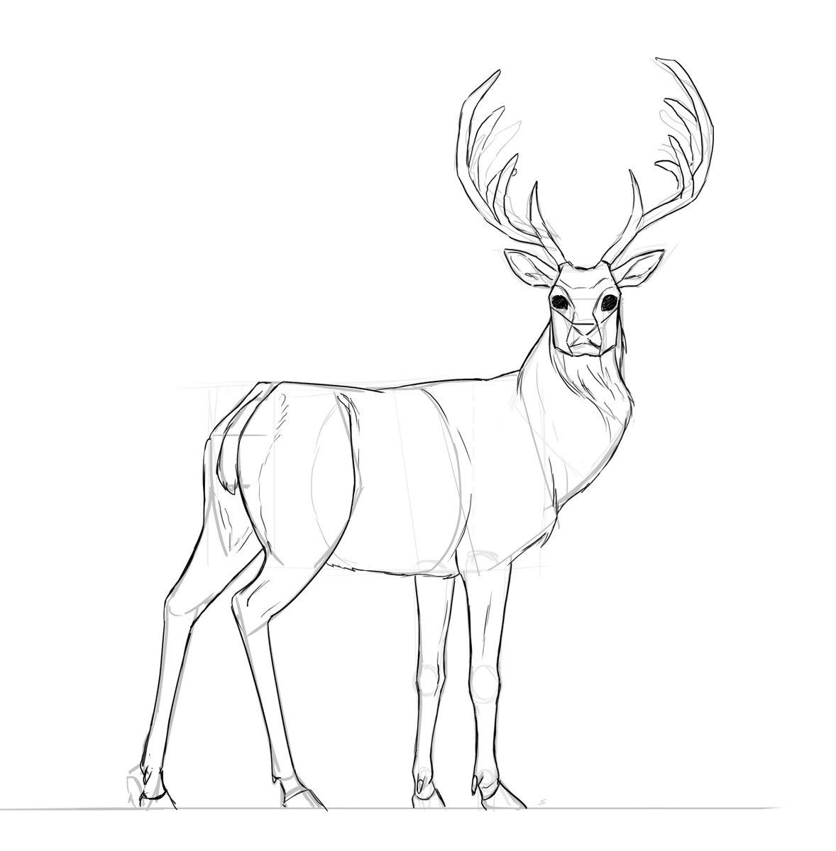 Dessindigo dessindigo site twitter - Comment dessiner un cerf ...