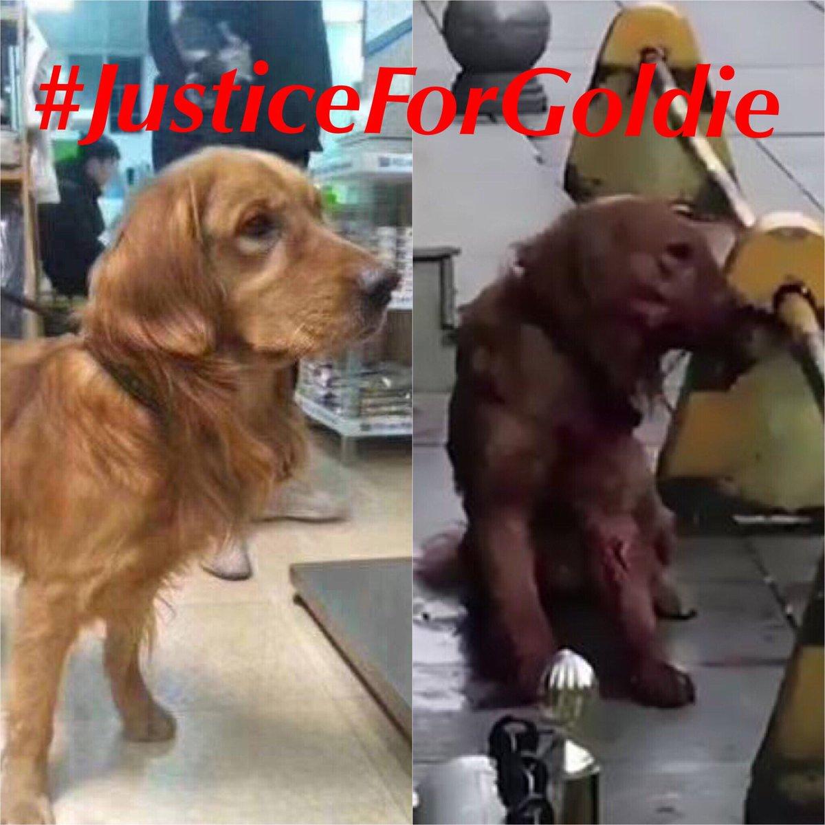 justiceforgoldie hashtag on Twitter