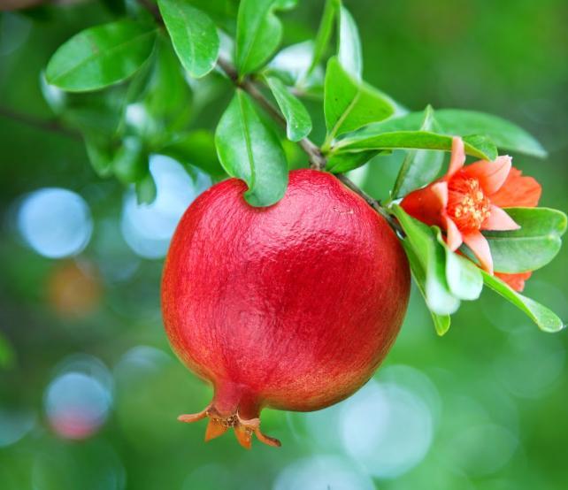 Pomegranates, the fruits of Jannah. ❤❤