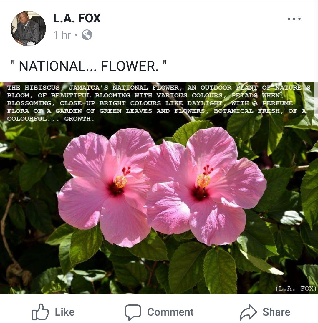 National flower of jamaica beautiful flower 2017 6 national symbols every jamaican should know izmirmasajfo Choice Image