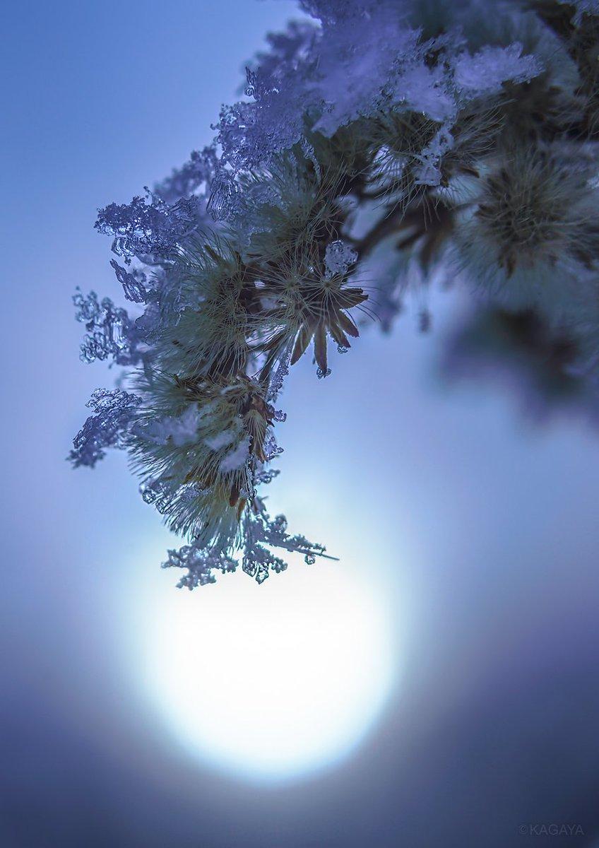 冬の宝石をまとった草木たち。 (一昨日北海道上士幌町にて撮影)