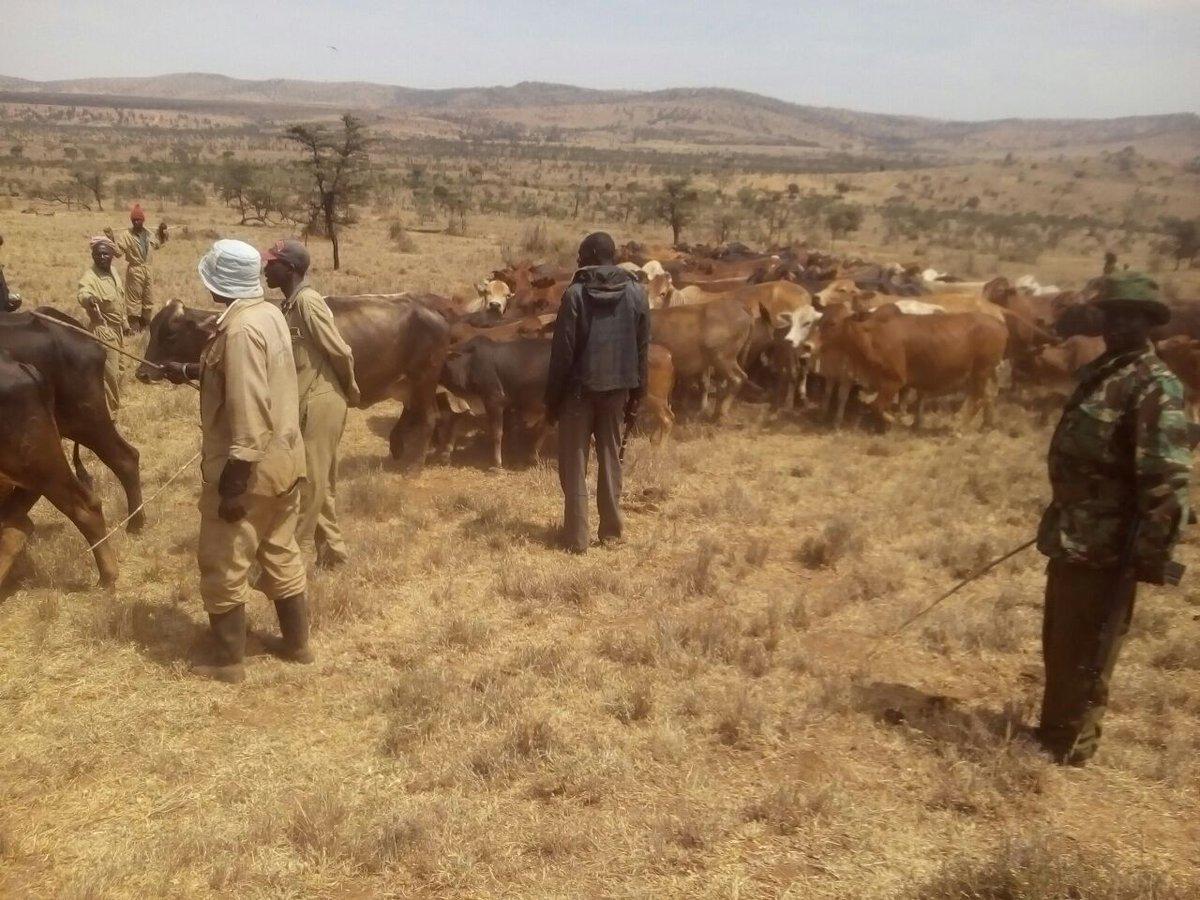 Ole Naishu Ranch Laikipia Mukogodo Forest : Police recover