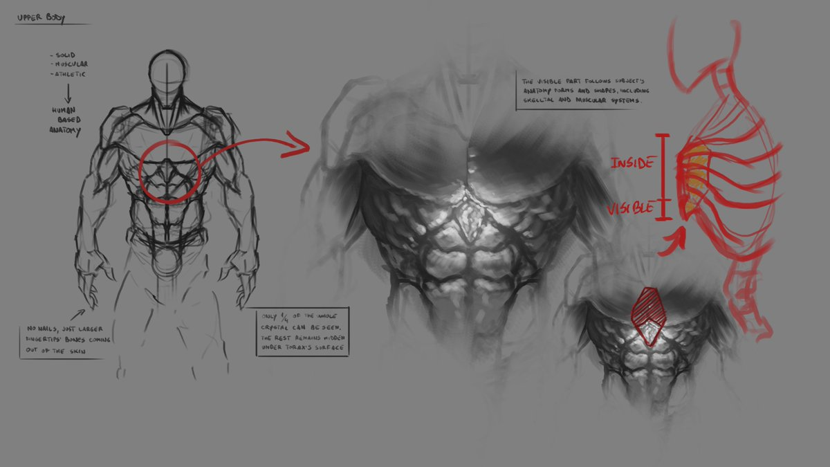 Catness Games On Twitter In This Anatomical Study We Try To