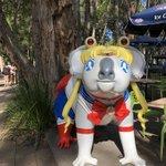 うさぎじゃなくてコアラwオーストラリアには謎のセーラームーンコアラがいる!