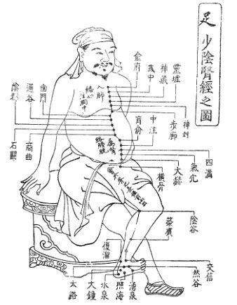 足の少陰腎経