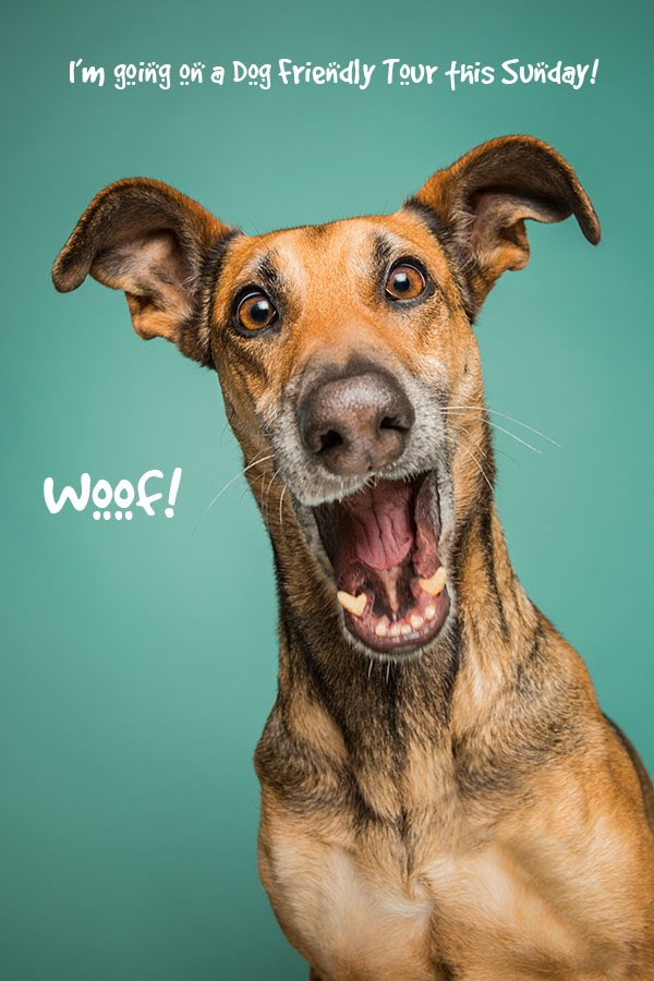 Belfast #DogFriendlyTour on Sunday is going to be great fun! #fullybooked ...