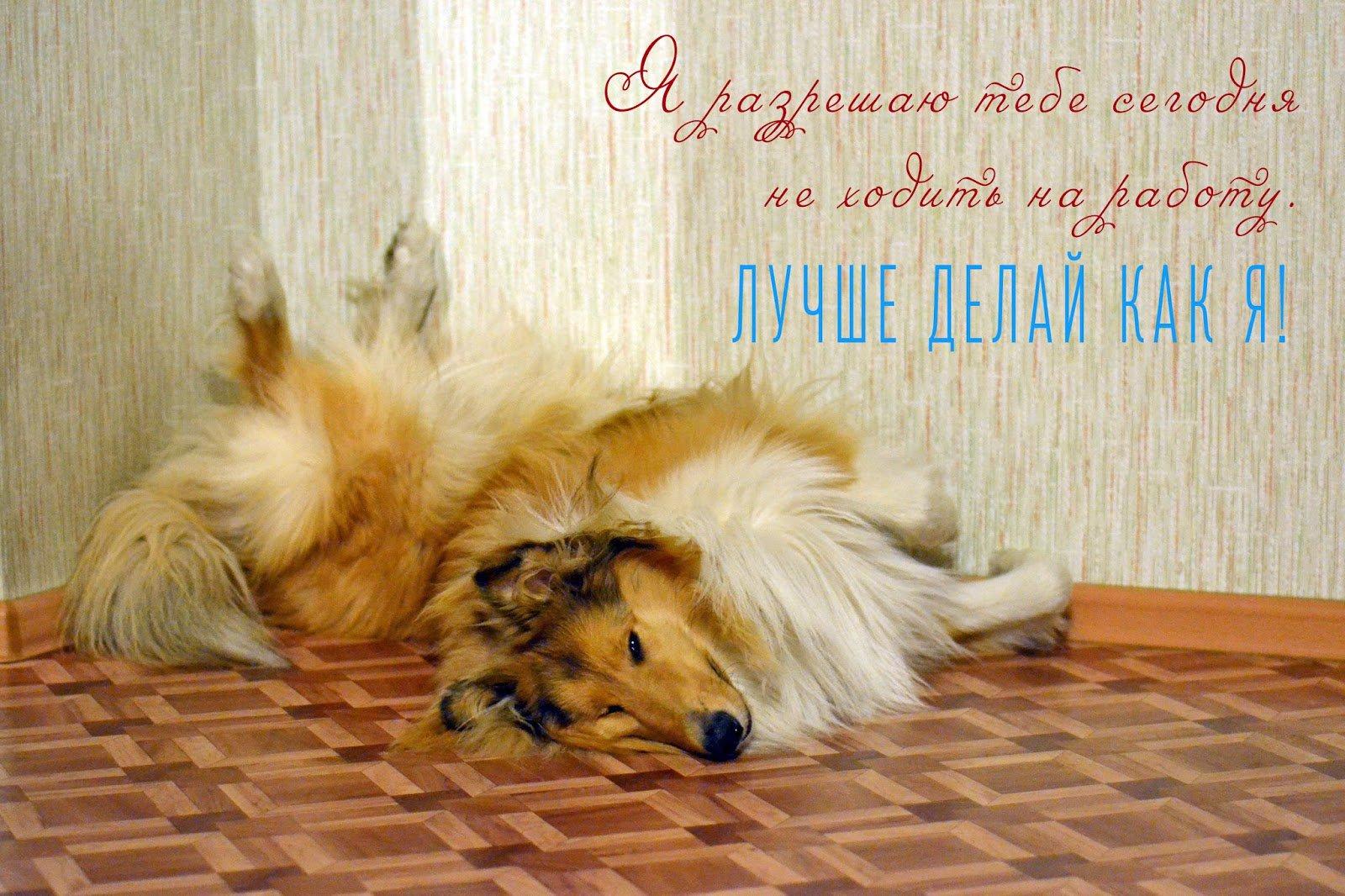 Днем рождения, доброе утро воскресенье картинки прикольные с собаками