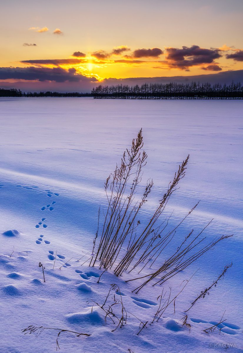夕陽の十勝平野。 太陽から上に伸びる光は太陽柱(サンピラー)。冬の北海道など寒いときにはしばしば見ら…
