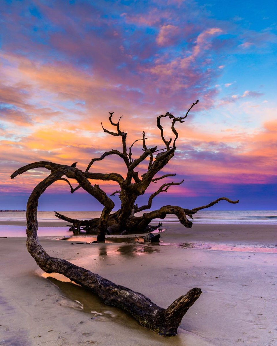 RT @ExploreGeorgia: Sand, sun & Driftwood (Beach) #LesserKnownColdRemedies #jekyllislandga https://t.co/uPn31VR8M2