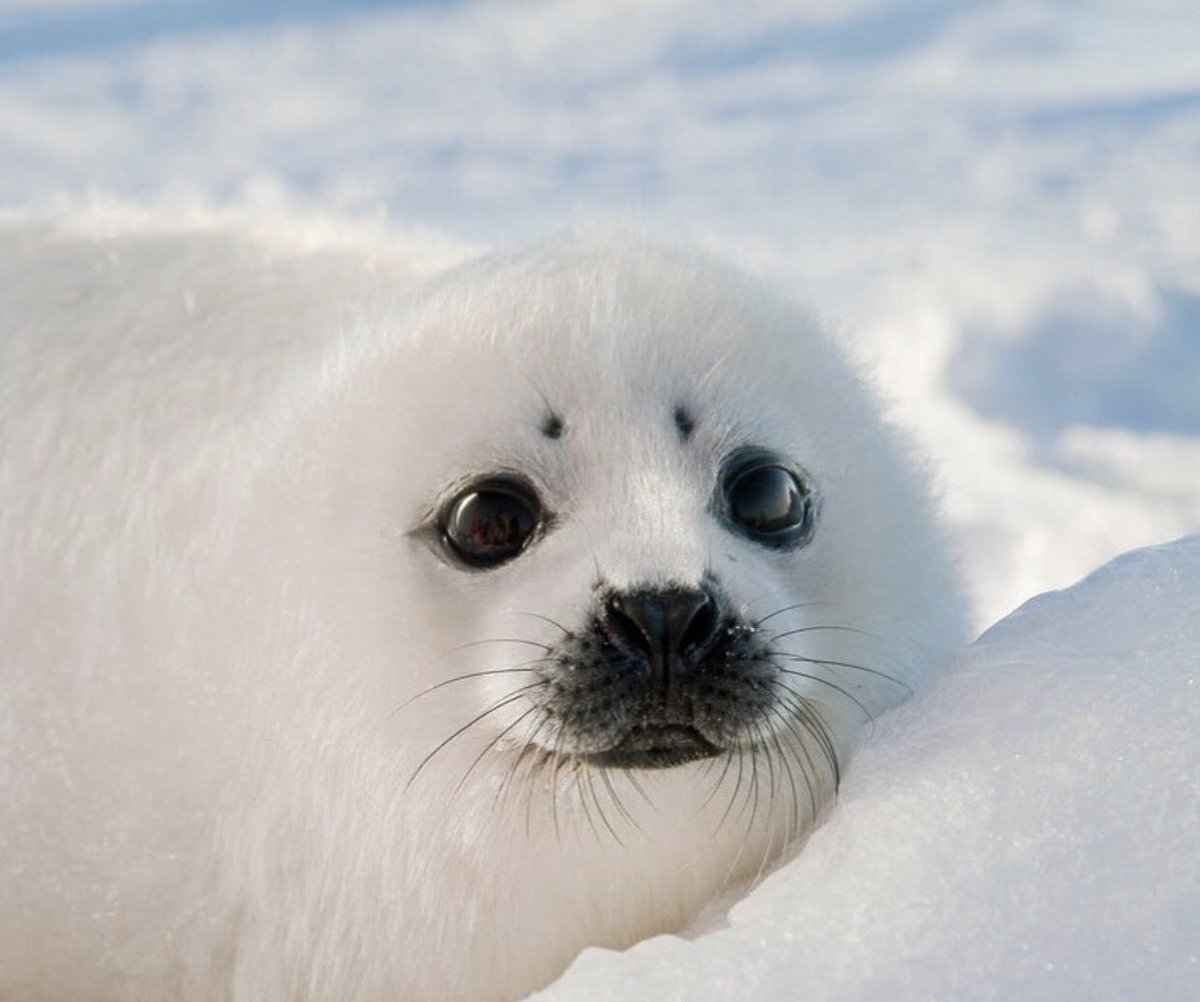 """Oceana on Twitter: """"Those eyes 😍 This is an adorable baby ..."""