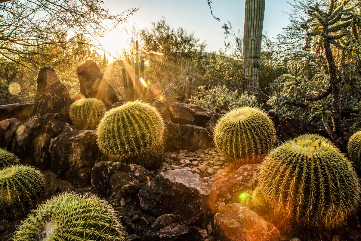 Desert Botanical Garden on Twitter: \