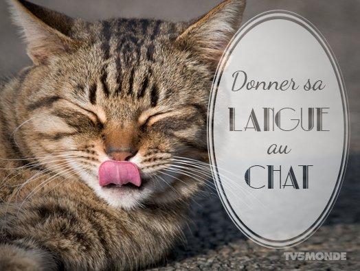 Tv5monde Japon On Twitter Õランス語表現 Donner Sa Langue Au Chat Ǜ´è¨³ ȈŒã''猫にあげる Ƅå'³ džŸæ…®ã™ã'‹ã®ã''やめる
