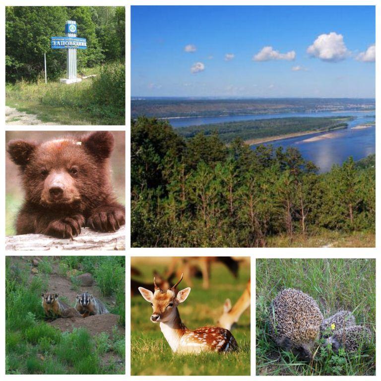 Огромные открытка, открытки день заповедников и национальных парков