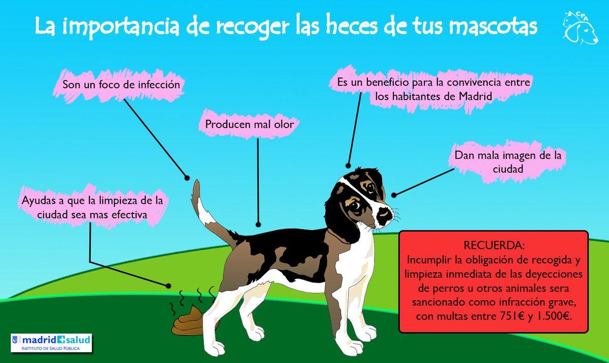 Centro recogida animales madrid