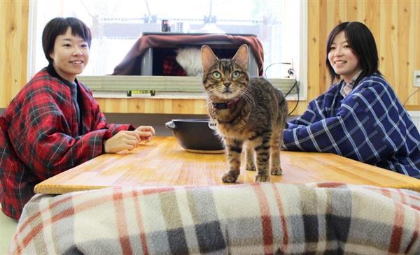 こたつで暖まりながら猫と触れ合える冬季特別企画「こたつネコ」が人気 那須どうぶつ王国  →常時10匹…