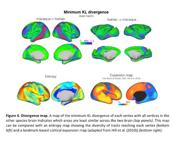 Raphael Bene On Twitter Whole Brain Comparative Anatomy Using