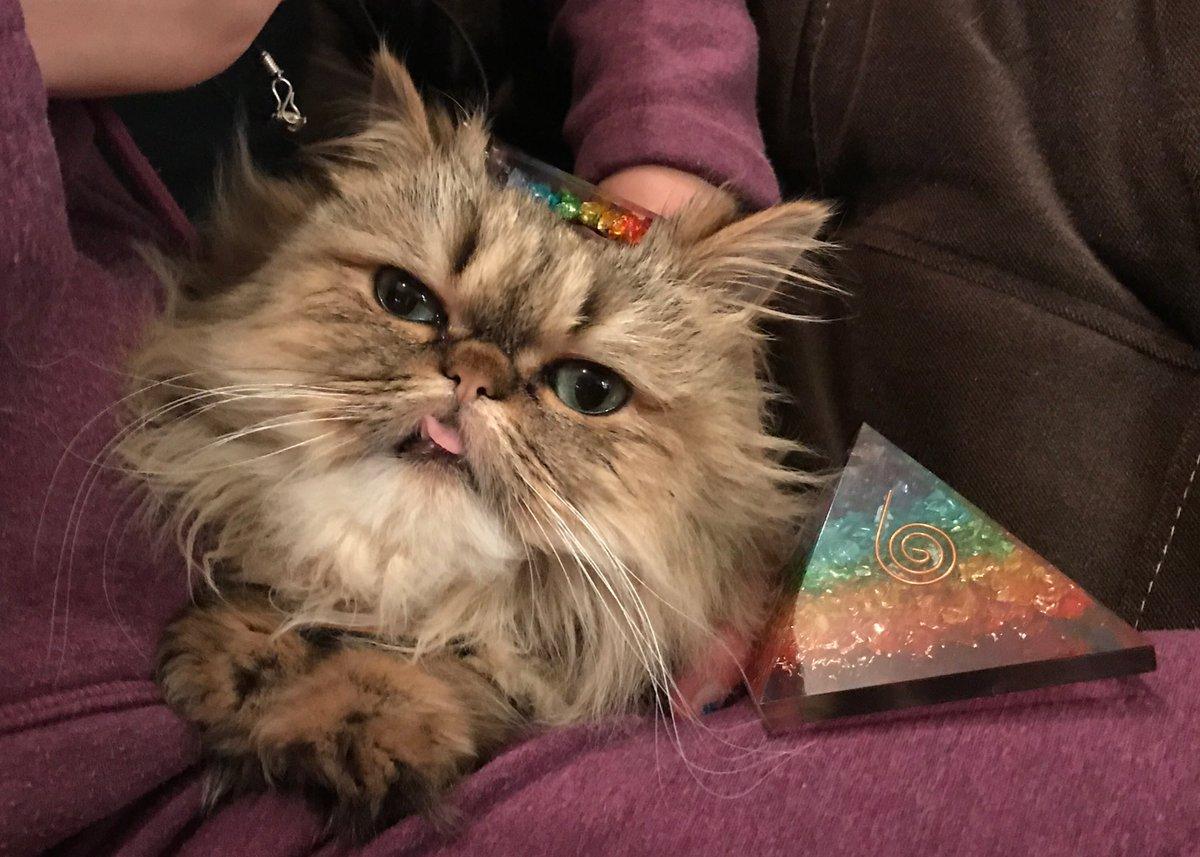 kitty hashtag on Twitter