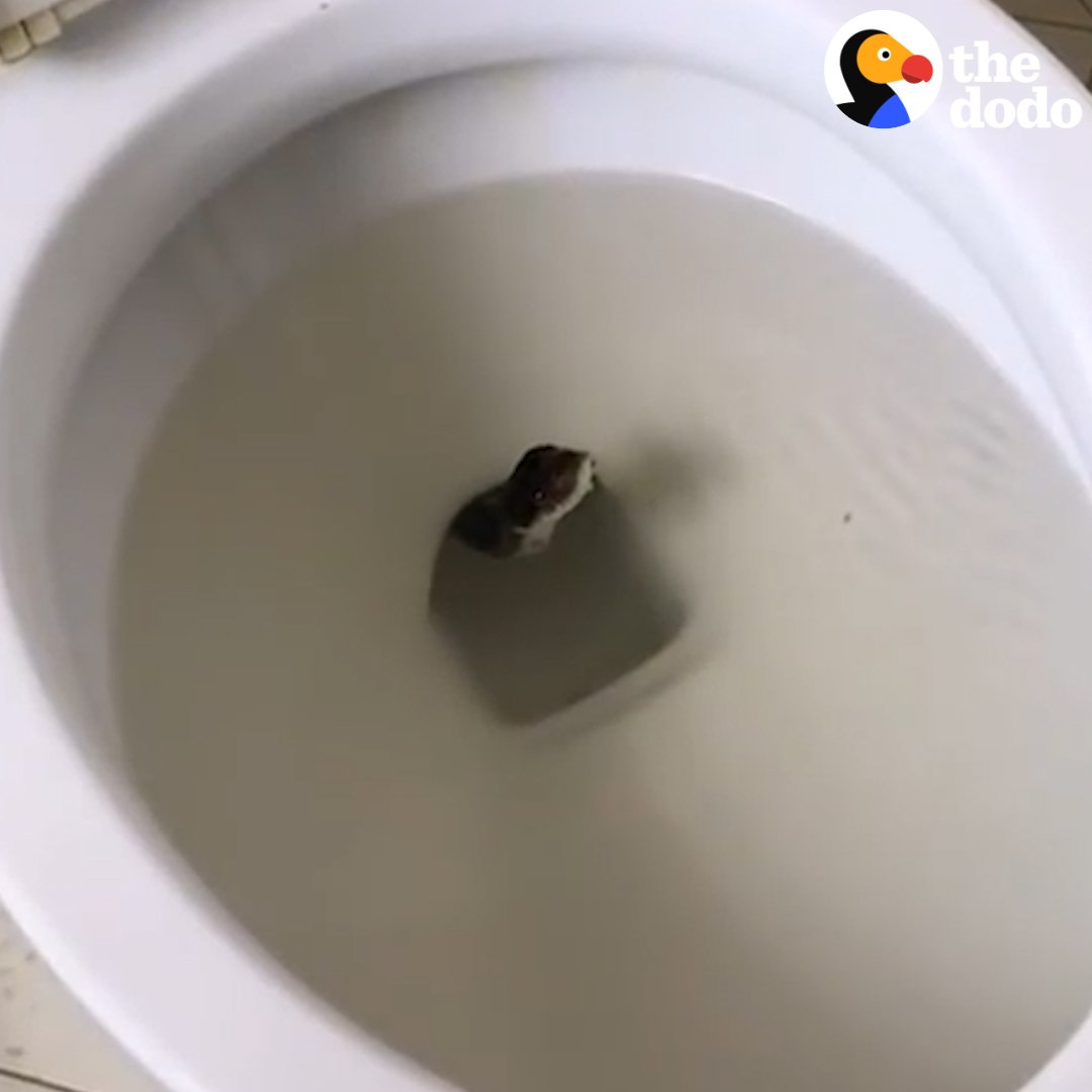 Welcome to our worst nightmare 😱 #WorldToiletDay