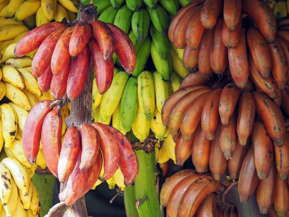 этого бананы сорта в картинках представленными