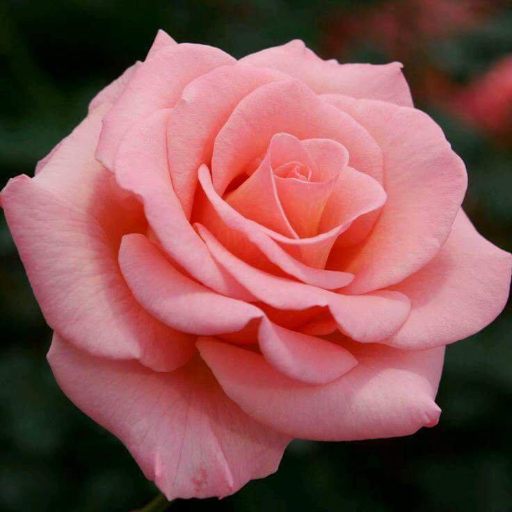 Ogni pensiero è come un fiore, va colto...
