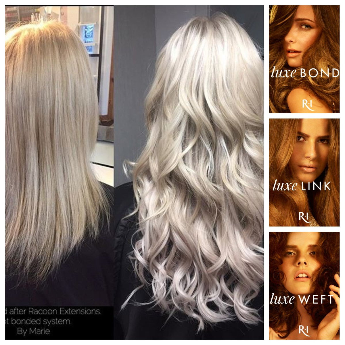 Racoon extensions uk