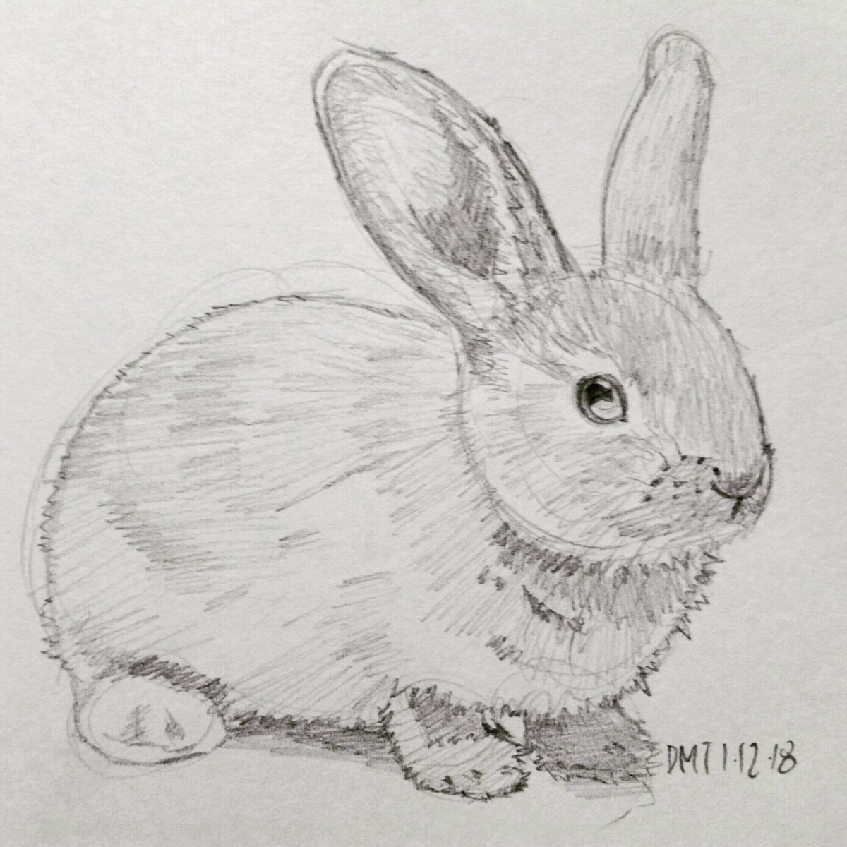 Rabbit pencil sketch dailydrawingchallenge dmt 2018pic twitter com qupe8re0gb