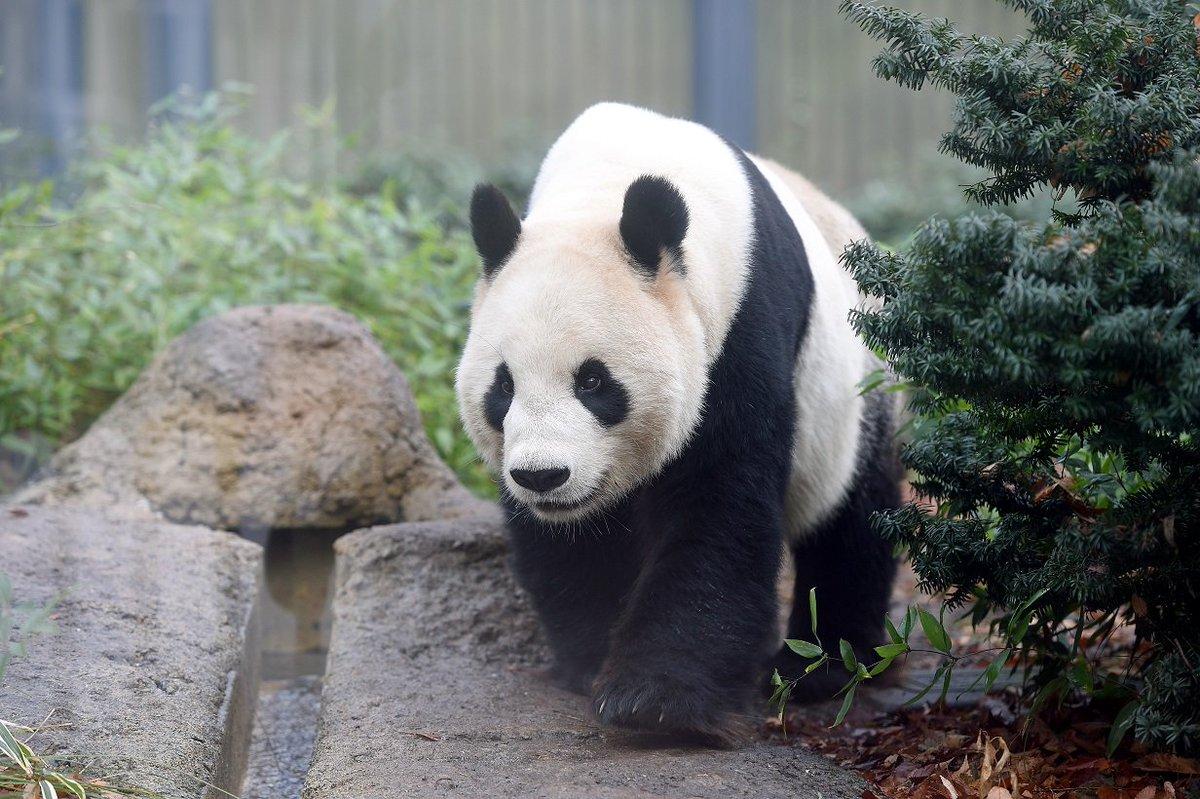 ジャイアントパンダ「リーリー&シンシン」来園7周年記念シンポジウム 「上野動物園の限りない挑戦」 2…