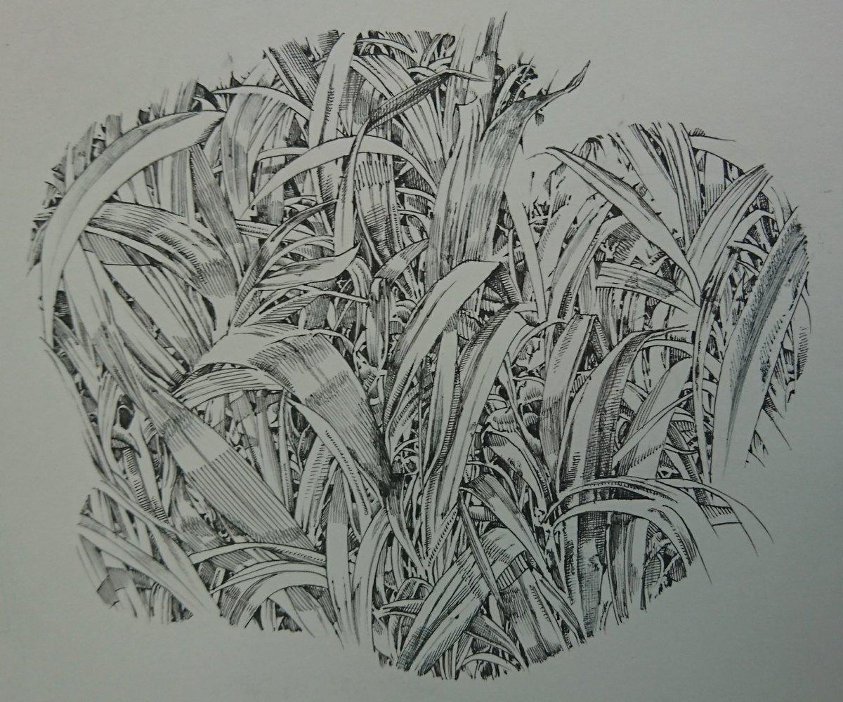 前にツイートしたものとちょっと違いますが、葉とか草の密集した部分を描くときにこんな感じの目安を入れて…
