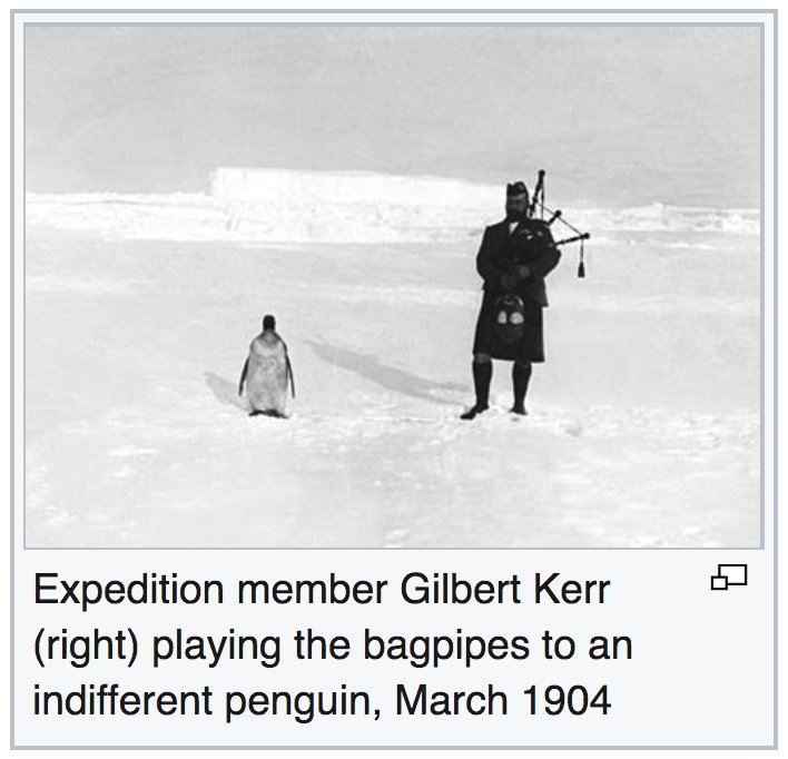 Marvelousness in my twitterfeed, all day long. Especially this, on #PenguinAwarenessDay