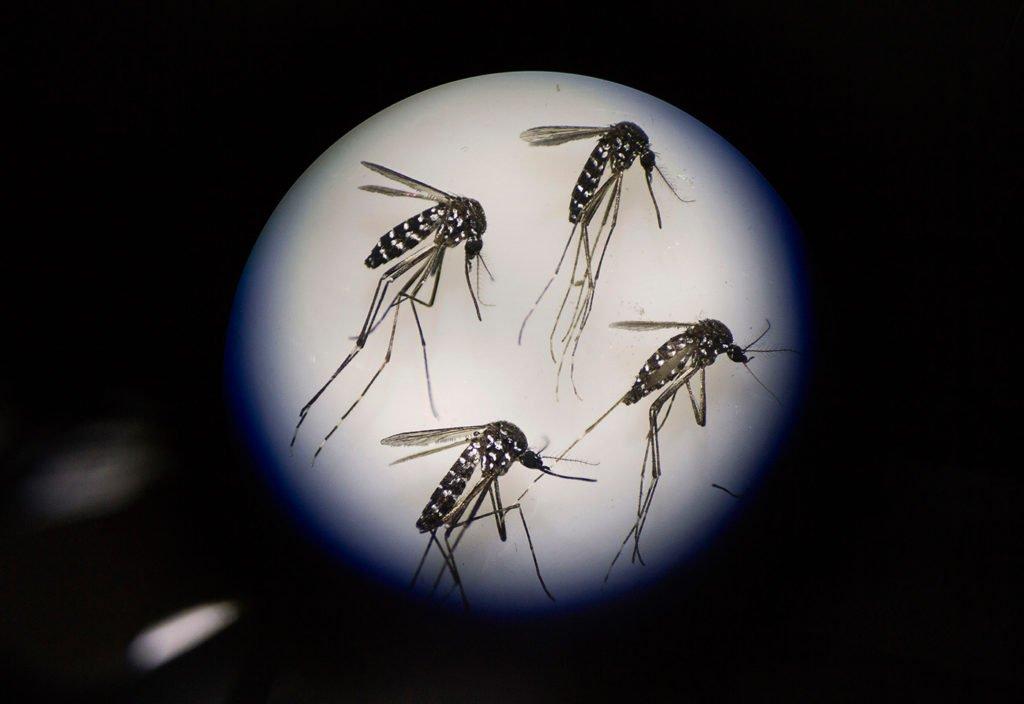 毎週200万匹の蚊を放出する中国の「蚊の工場」:画像ギャラリー 〈アーカイヴ記事〉 https://t.co/CPcJDubvti