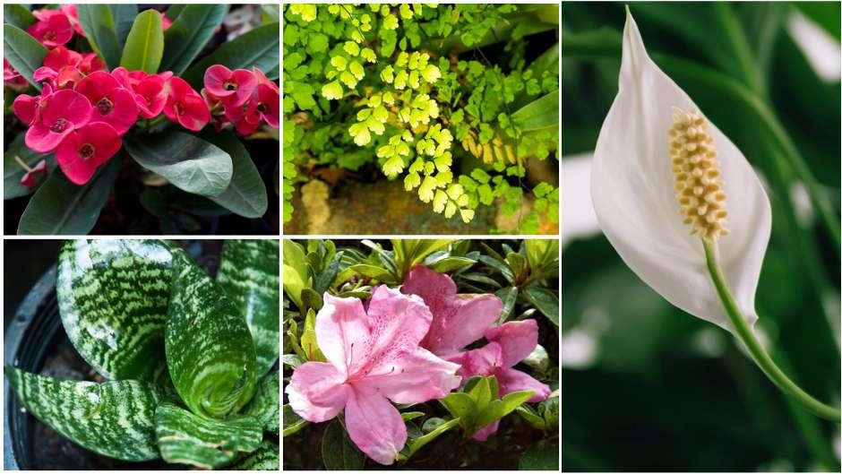 As plantas da sua casa que podem ser tóxicas para os animais de estimação https://t.co/6q0XOorX2e