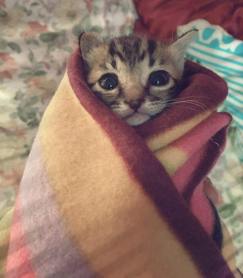 Arden Rose On Twitter Cats Wrapped In Blankets Burrito Style Big Mood