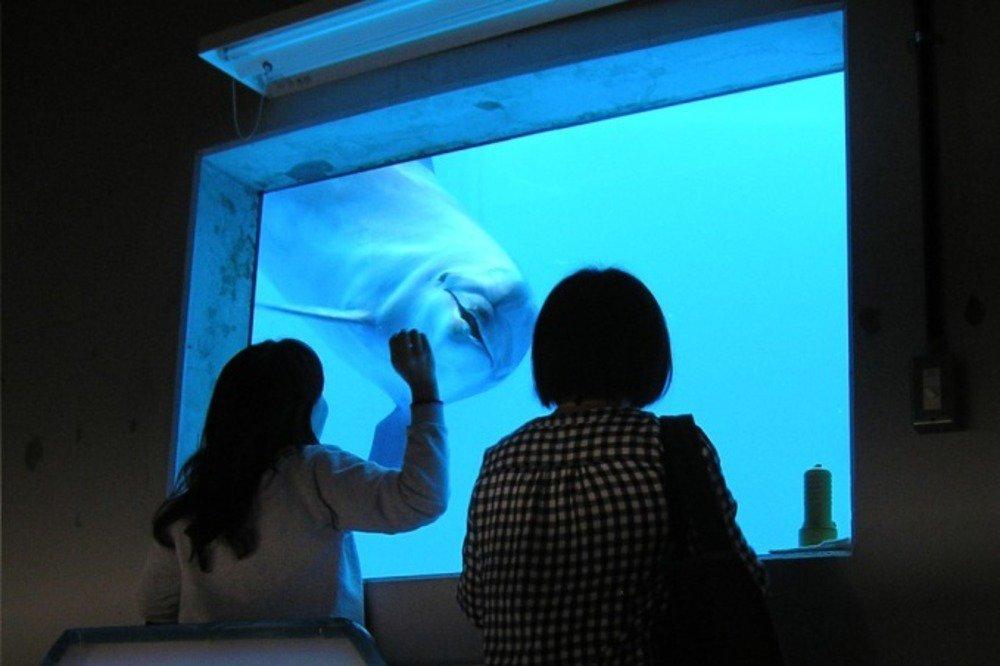 """新江ノ島水族館の限定展示「恋する""""えのすい""""」クラゲが泳ぐワイングラスツリーやバレンタイン仕様の水槽 - https://t.co/jWgGDJ3hEL"""