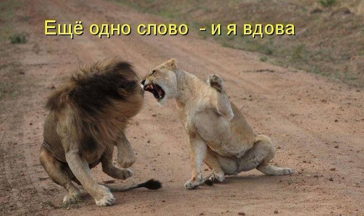 верность, царь зверей демотиваторы скупка оценивает выкупает