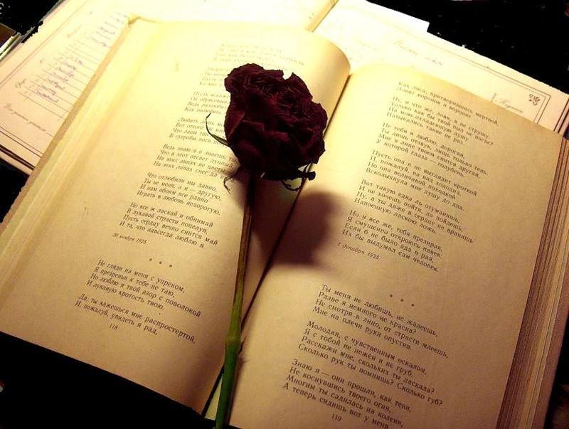 Картинки под стихи о жизни, чайная роза открытка